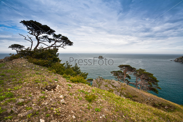 strange tree on the hill by the sea