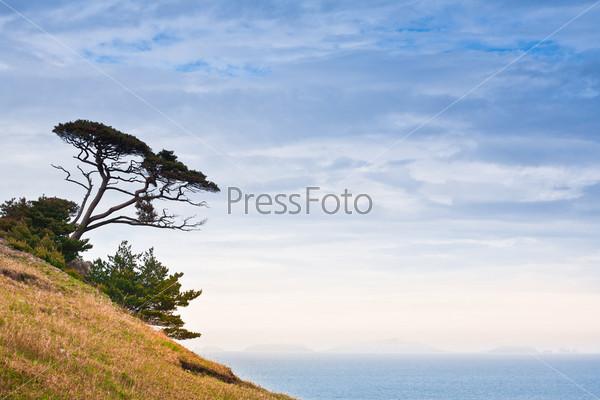 strange tree on the hill