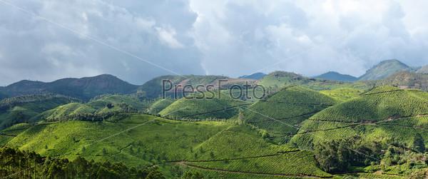 Panorama of tea plantations