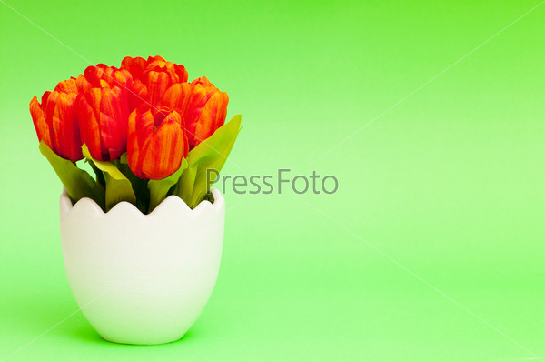 Colorful tulip flowers in the white pot