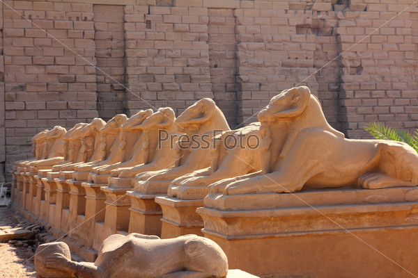 egypt statues of sphinx in karnak temple