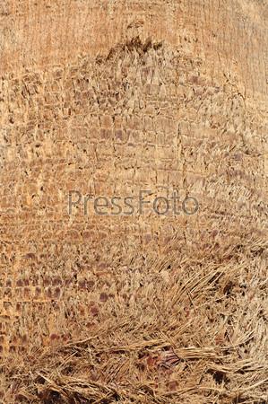 Фактура коры пальмы