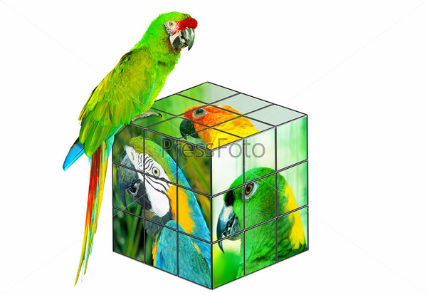 Parrot sitting on the cube
