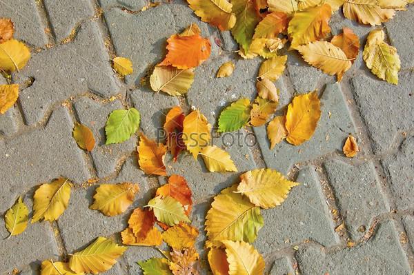 Опавшие осенние листья на тротуаре