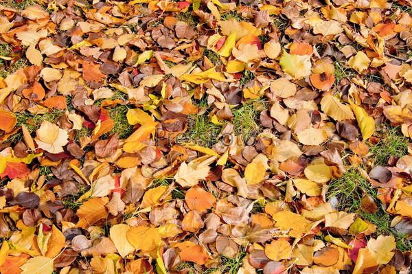 Опавшие осенние листья