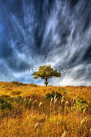 yellow autumn oak