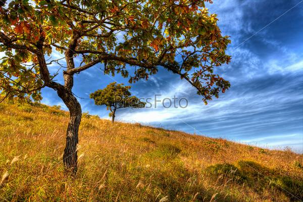 yellow autumn oak tree on the hillside