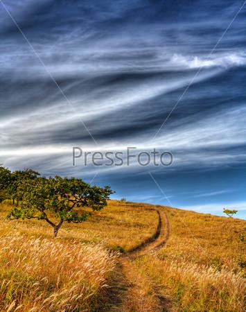 oak tree on the hillside