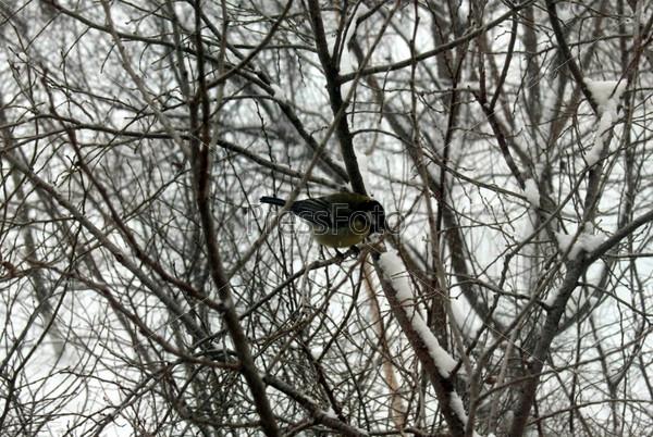 Снегирь, сидящий на ветке дерева