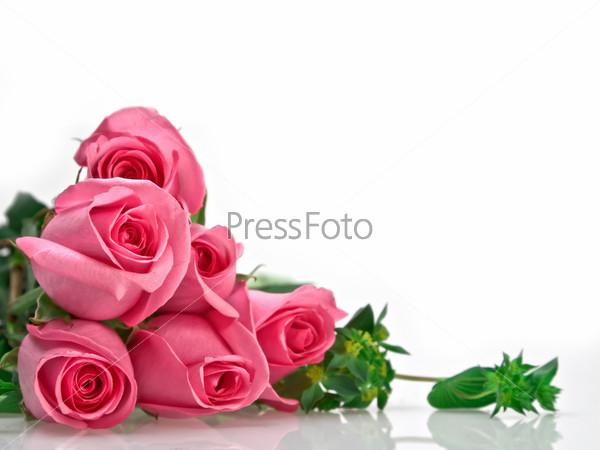 Розовый букет на белом фоне
