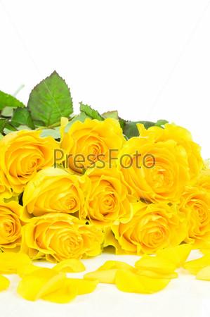 Букет желтых роз на белом фоне