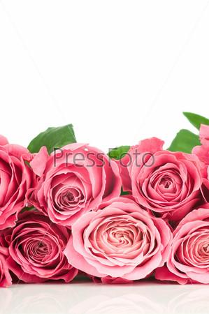 Бутоны розовых роз на белом фоне