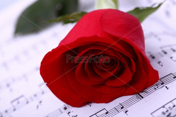 Красная роза на нотах крупным планом