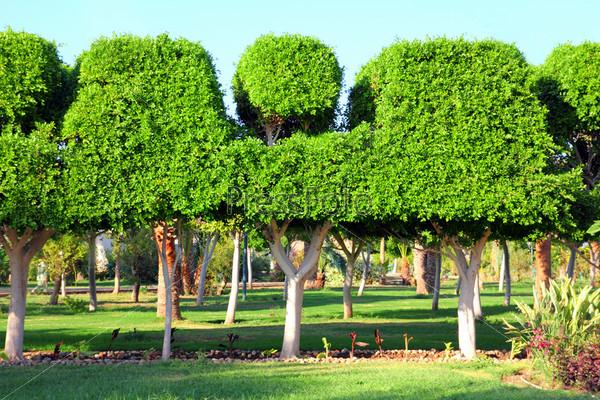 Красивое садовое дерево