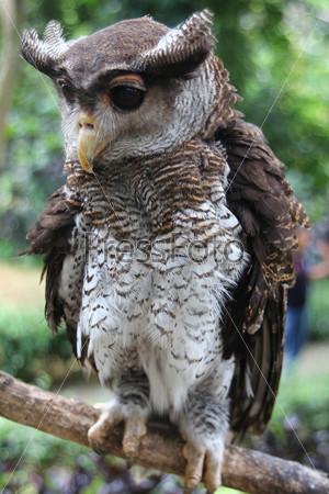 фото красивая сова