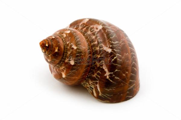 marine seashell macro