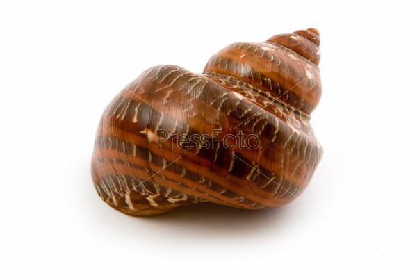 marine seashell close up