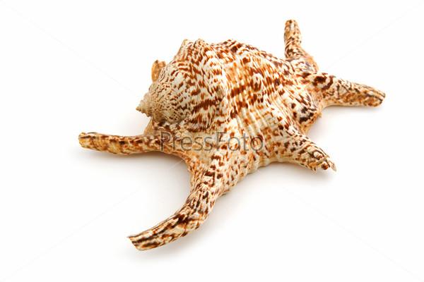 marine seashell