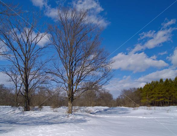 Зимний солнечный день на лесной поляне