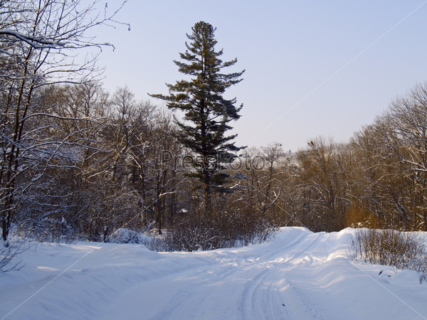 Landscape with winter wood road