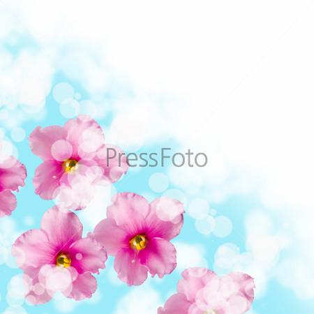 Фиалки Бесшовный Фон Клипарт Картинки | Премиум-изображения в ... | 450x450