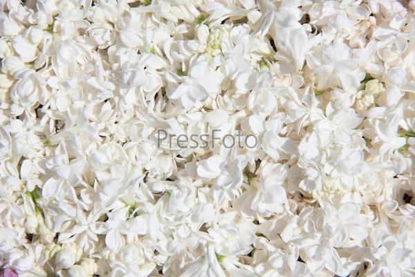 Фон цветы белые