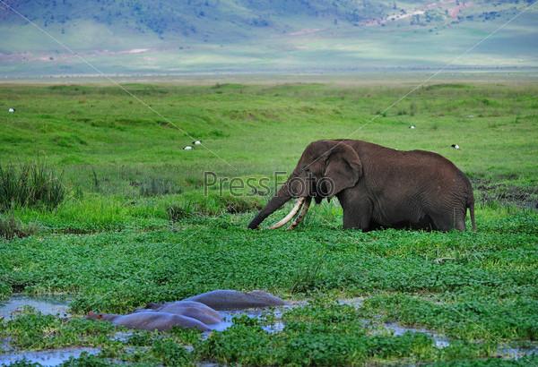 Слон изображение 2