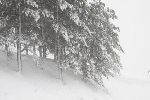 Скачать видео вьюга в лесу фото 643-968