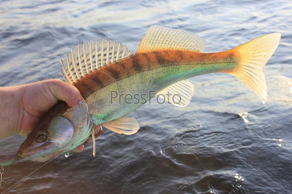 ловить руками рыбу в море