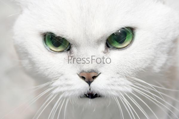 картинки кошка с зелёными глазами
