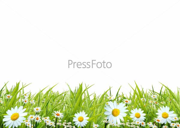 Картинки цветы природы