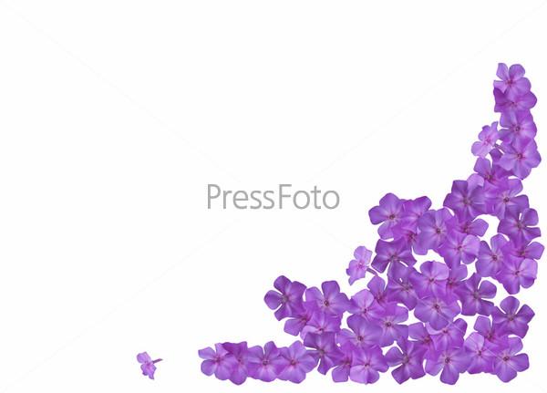 Фиолетовая нежность - рамка для фото » Фото в рамку
