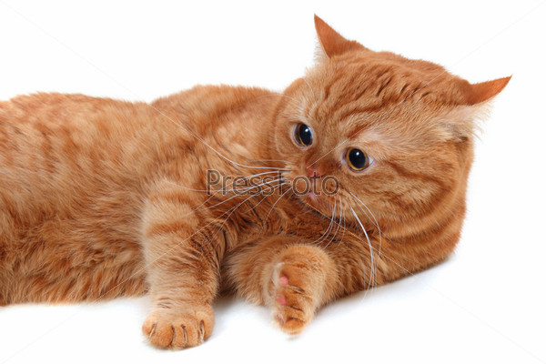 what does it mean if a male cat pees blood