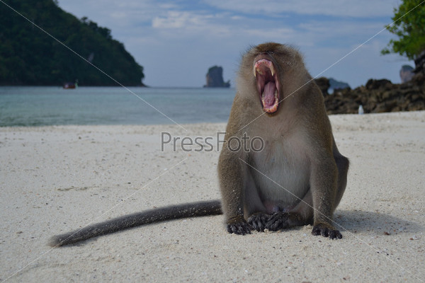 Фото обезьян на пляже