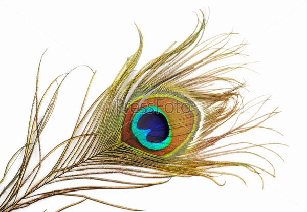 Красивое павлинье перо крупным планом на белом фоне