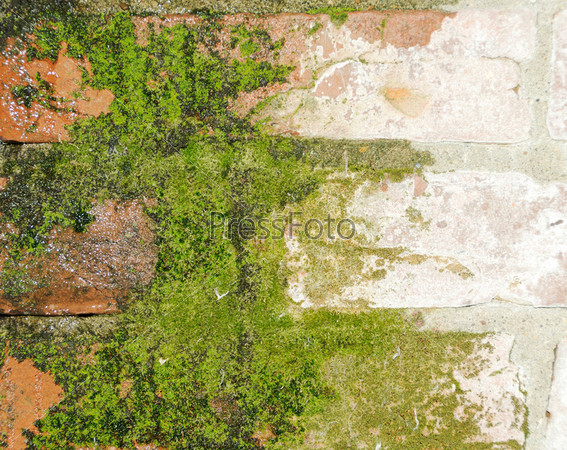Старая кирпичная стена, поросшая мхом