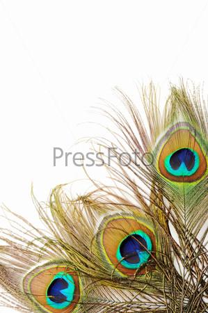 Фотография на тему Красивые павлиньи перья крупным планом на белом фоне