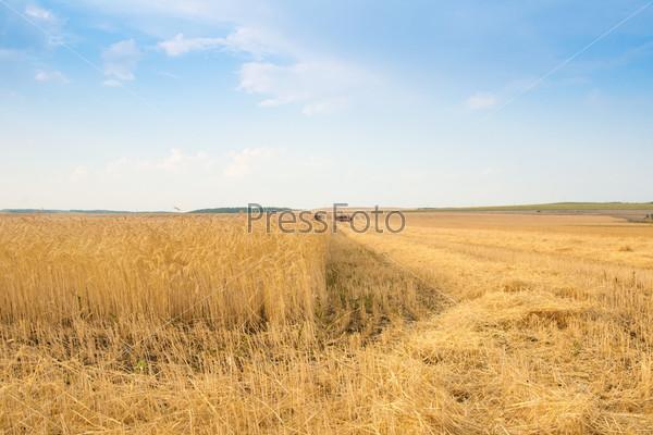 Зерноуборочный комбайн работает на поле