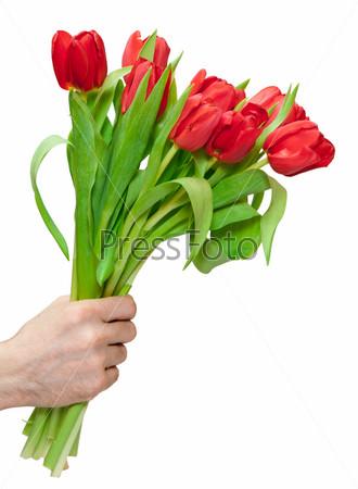 Красные тюльпаны в руке на белом фоне