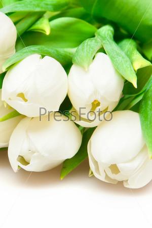 Белые тюльпаны на белом фоне