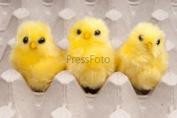 Желтые цыплята в коробке