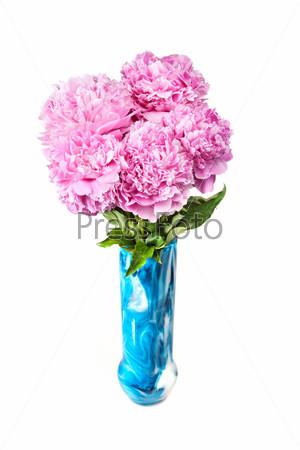Розовые пионы, изолированные на белом фоне