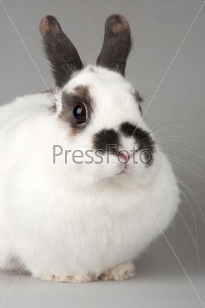 Белый кролик с черными пятнами
