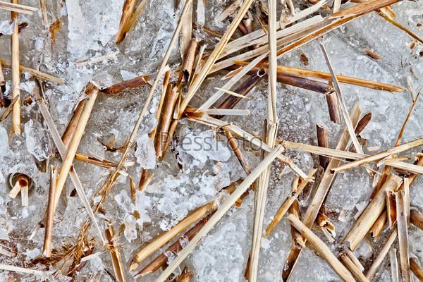 Ветки сухого тростника на льду