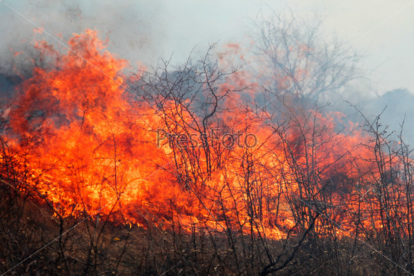 Фотография на тему Сухая трава горит в ветреный весенний день