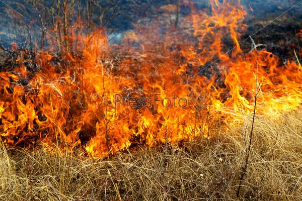 Сухая трава горит в ветреный весенний день