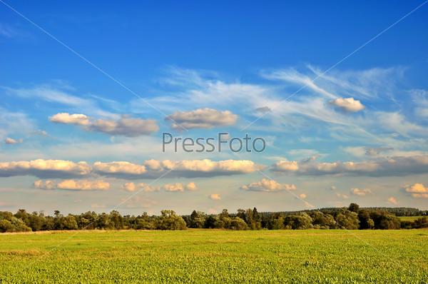 Летний сельский пейзаж с облачным небом, сухой травой и деревьями