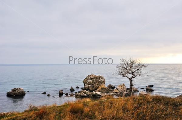 Дерево и травы на скалистом зимнем морском берегу
