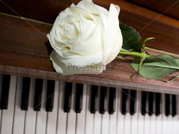 Фотография на тему Белая роза на фортепианной клавиатуре