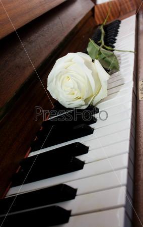 Белая роза на фортепианной клавиатуре
